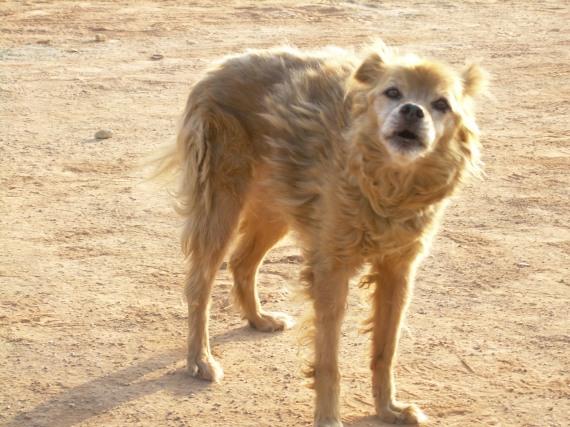 Tiere werden immer   von einigen Menschen   Enttäuscht und verlieren ihr Vertrauen